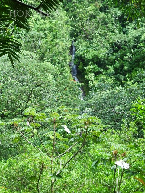 マノア 滝 トレイル